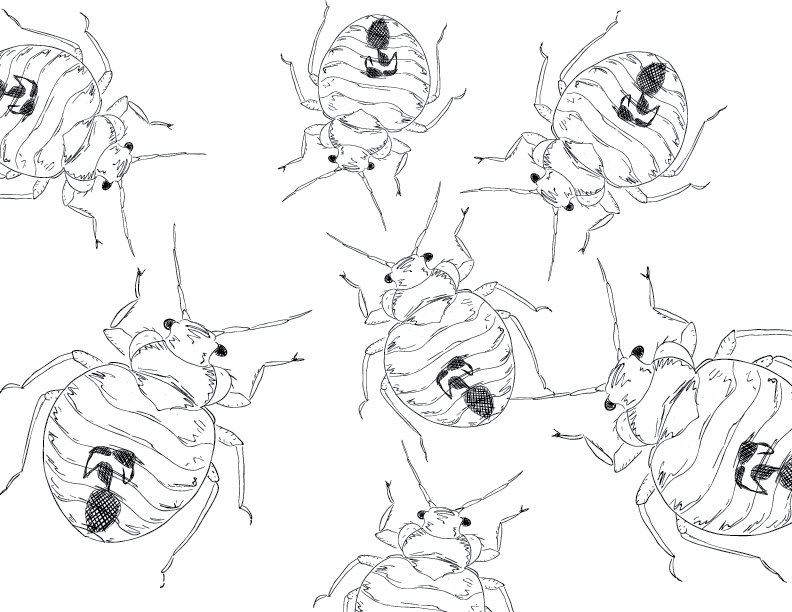 crude mono sketch of bedbugs covering the screen