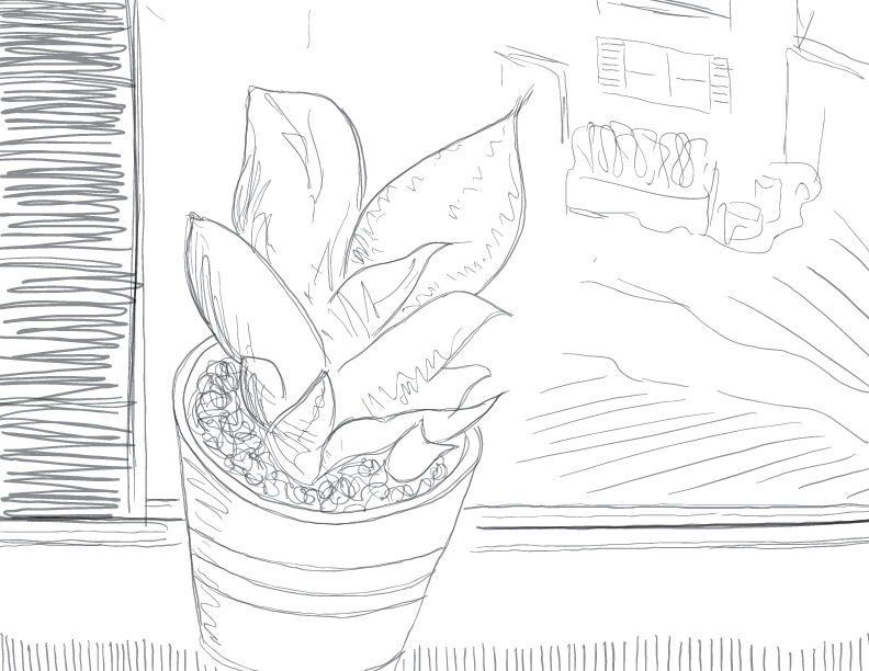 crude greyscale sketch of a small leafy plant on a window sill